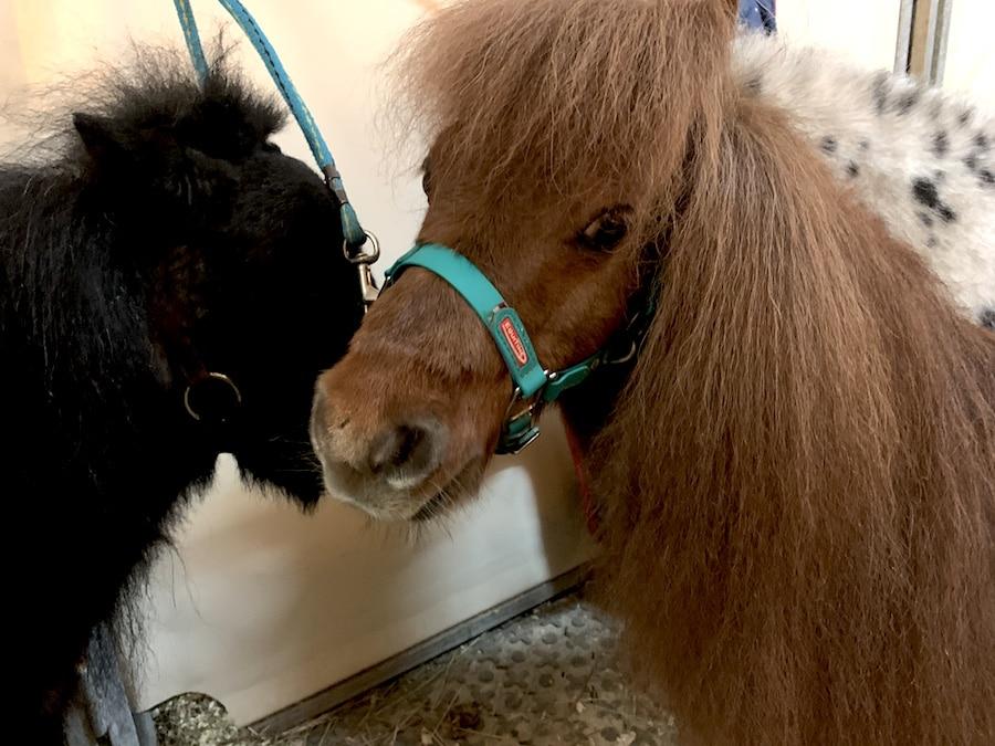 Supermom_Mamablog_Cavalluna_Pferde