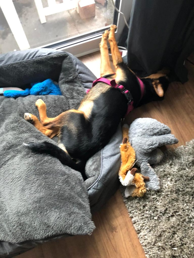 Supermom_Mamablog_Familienhund